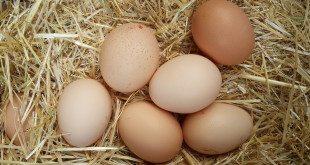 Köy Yumurtası Satmak