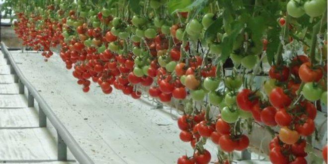 Tarım ve Hayvancılık İş Fikirleri