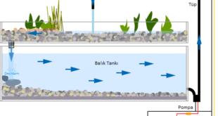 Sebze ve Balığı Beraber Yetiştirmek ( Akuaponik )