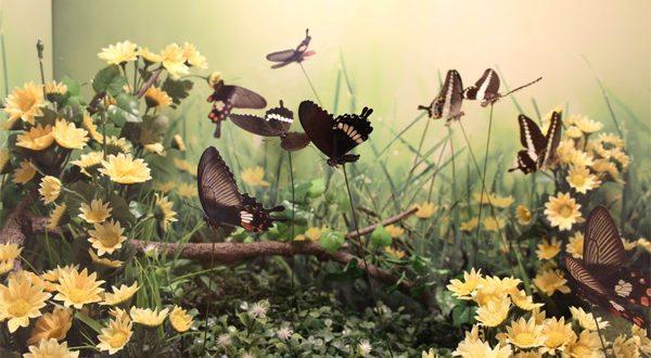Kelebek Kozası Satmak ve Çiftliği Açmak