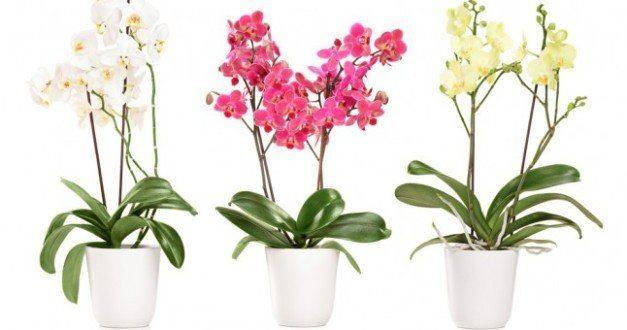 Orkide Yetiştiriciliği