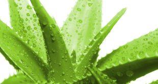 Sağlık ve Güzellik için Bitkisel Yağ Satışı Yapmak