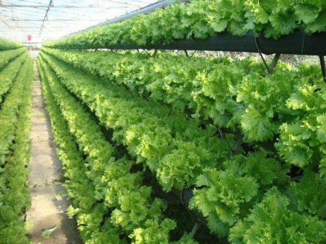 Topraksız Tarım Yapmak
