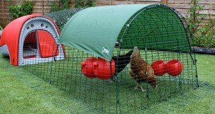 Bahçe için Tavuk Kümesi Üretin