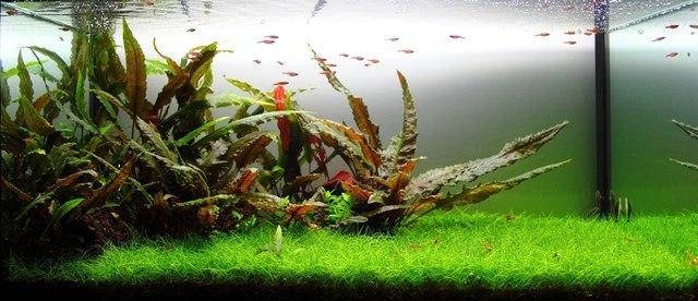Akvaryum Balığı Yetiştiriciliği