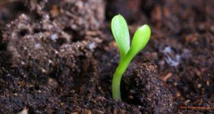 Bioverim Organik Solucan Gübresi Bayilik