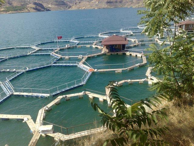 Balık Çiftliği Açmak