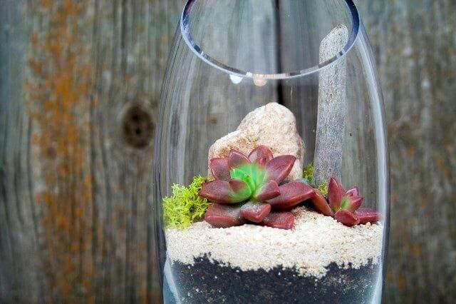 Teraryum (Terrarium) Çeşitleri Örnekleri Fotoğrafları