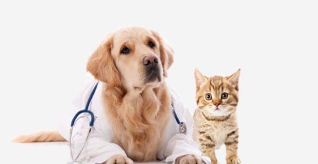 Veteriner Kliniği Açmak İçin